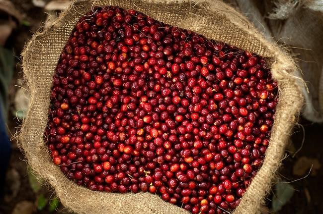 coffee-flour-coffee-cherries
